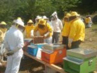 Iscrizioni aperte per il corso di formazione per diventare apicoltore