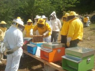 thumbnail_Gruppo APAM a Riccia in apiario 2016 (1)