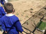 È stato inaugurato l'orto scolastico del progetto 'nonni-nipoti'