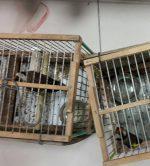 Giugliano: maltrattamento e possesso di fauna selvatica