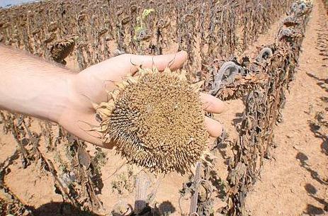 Allarme siccità in Campania