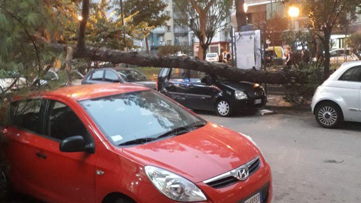 Allerta meteo: crolli di alberi a Piazza San Paolo e Via Principe di Piemonte