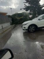 Maltempo ad Arpino. Un albero cade bloccando la strada che collega alla via nazionale