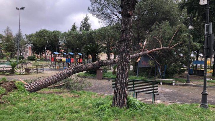 Forte vento cadono alberi e cartelloni pubblicitari a Casoria