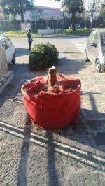 Casoria, albero reciso alle radici in Piazza Dante