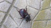 FOTO – Invasione delle blatte a Casoria: urgente un intervento